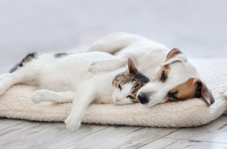 Can CBD help dogs or cats with anxiety?