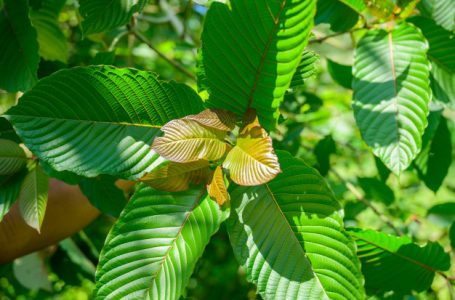 Can You Use Kratom for mood-lifting?